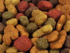 Best Dog Foods on the Market