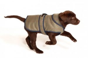 Dog running with vest on