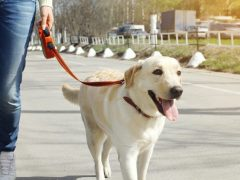 Role of Dog Supplies in Training Your New Pet