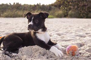 Dog Skills List