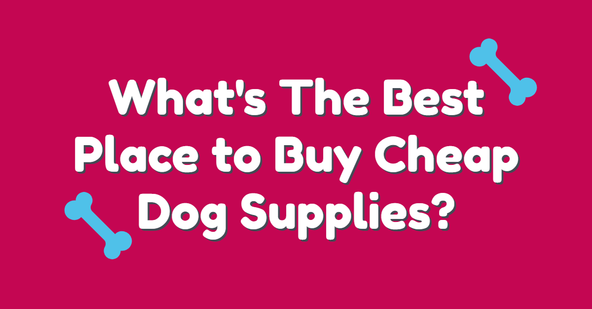 Text stating 'What's the best place to buy cheap dog supplies?' with two bones on each side