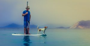 Dog and owner on a paddle board in water