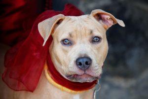 Dog wearing tagged collar