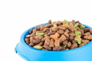 Bowl of dry dog food in blue bowl