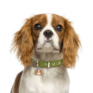 Dog wearing green dog collar
