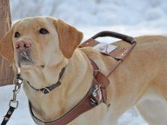Natural Dog Supplies -Top 10 Reasons to Buy
