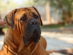 4 Important Tips When Training a Dog for Self-Protection