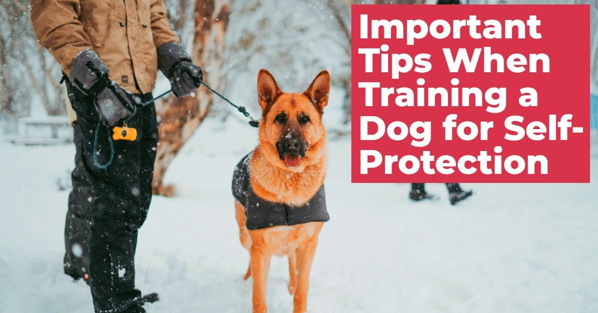 Text stating 'Important Tips When Training a Dog for Self Protection' with a dog on a leash
