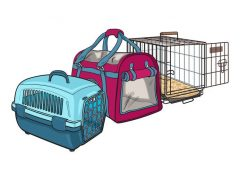 Best Travel Dog Crates