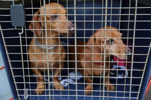 Dog crates for 2 dogs