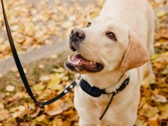 Best Dog Training Collars Under $100