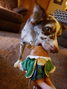 Photo of dog biting Super Chewer toy