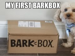 My First BarkBox- The Unboxing