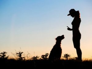 Obedience Training For Dogs – What Are My Options?