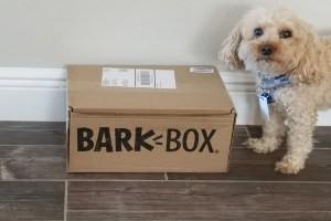 Dog sitting next to BarkBox