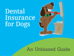 Dental Insurance for Dogs: An Unbiased Guide