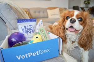 Cavalier King Charles Spaniel sitting next to unboxed VetPet Box