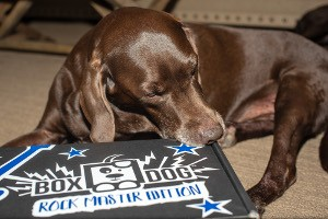 Brown dog laying next to unopened BoxDog box