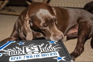 Brown dog laying next to unopened BoxDog box