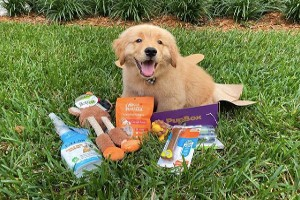 Pupbox summary with pros and cons
