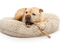 Are Bully Sticks Safe For Dogs?