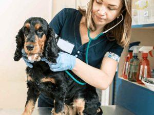Is Dog Insurance Worth It?