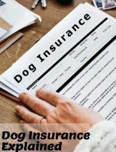 dog insurance paperwork