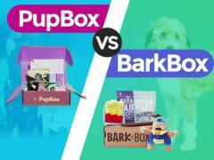 PupBox vs. BarkBox- Which is Better?