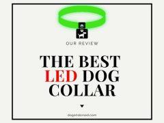 Top 3 Picks For Best LED Dog Collar