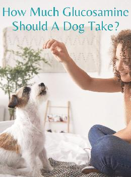 Woman giving glucosamine to dog