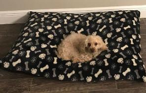 Dog sinking into dog bed