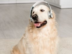 Dog Music: What Types Are Best For My Dog?