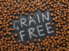 What Dog Foods Are Grain Free?