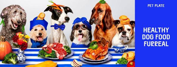 6 dogs sitting at a table eating fresh food