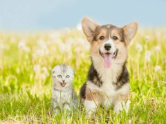 Cats vs Dogs-Which Pet is Best for You?