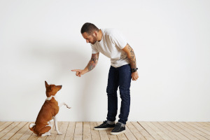 Man training his dog