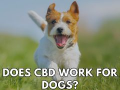 Does CBD Work For Dogs? Get The Straight Facts