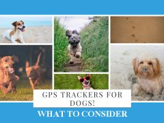 Choosing A GPS Tracker For Dogs And Our Top Picks