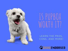 Is PupBox Worth It? (2020 Review)