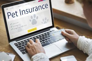 Person shopping for pet insurance for older dogs on computer