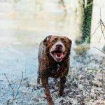 Wet dog running outside