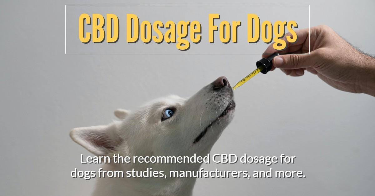 What Is The Recommended CBD Dosage For Dogs?