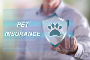 Man choosing pet insurance