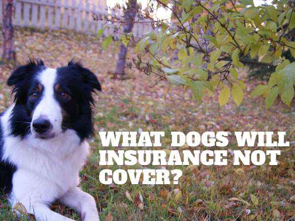 What dogs will insurance not cover?