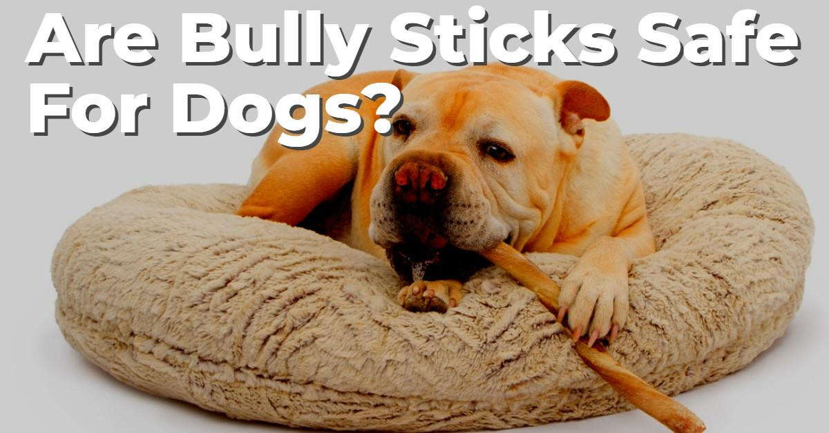 Text stating 'Are Bully Sticks Safe For Dogs?' with dog chewing on bully stick