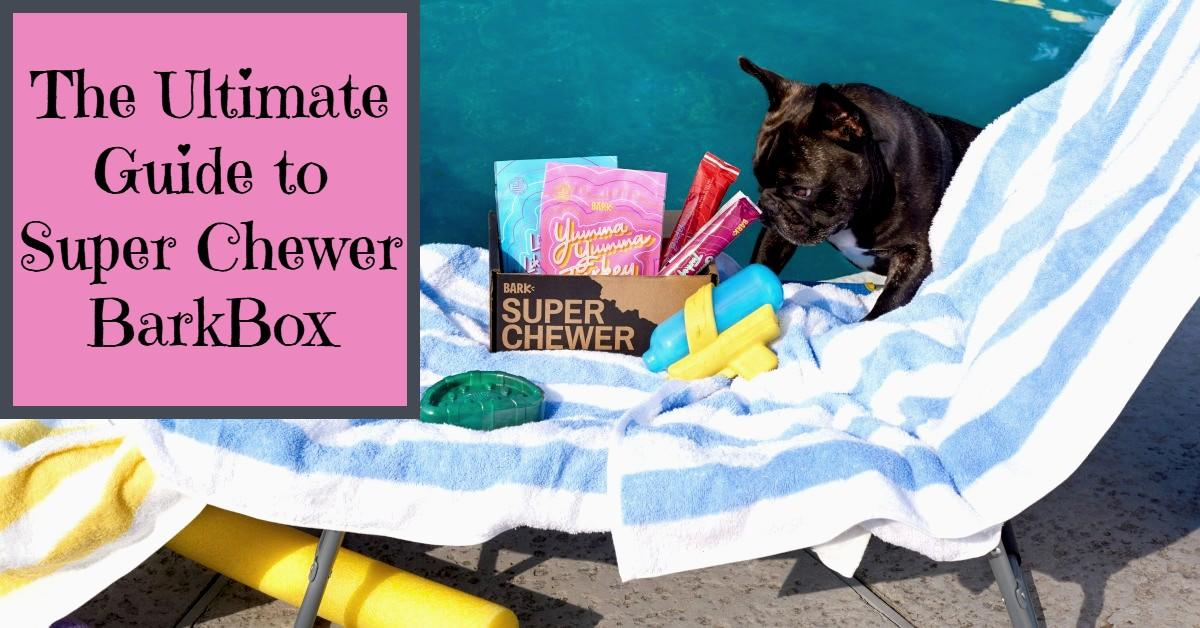 The Ultimate Guide to Super Chewer BarkBox