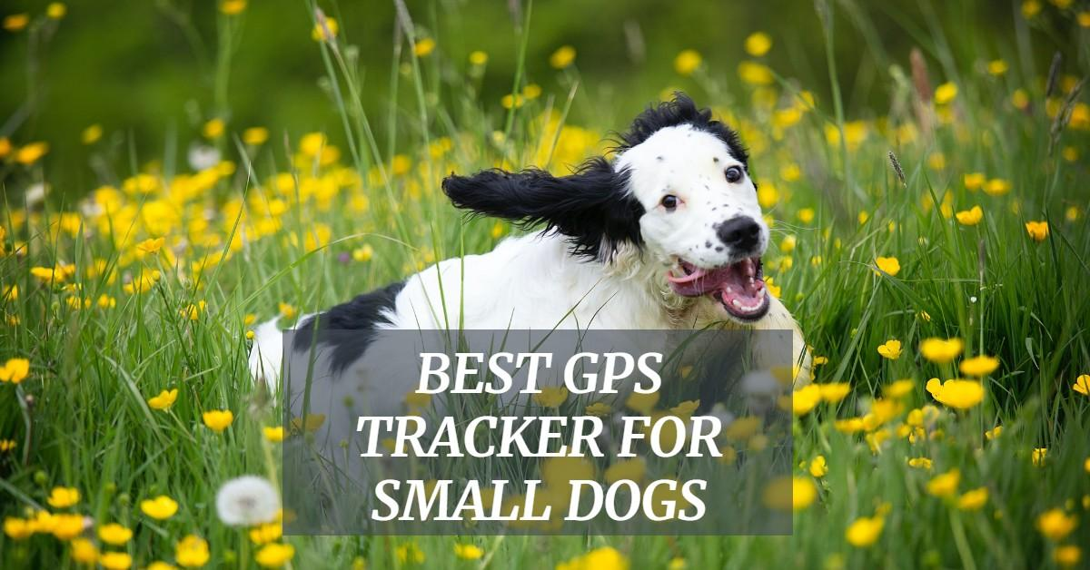 Best GPS Tracker For Small Dogs