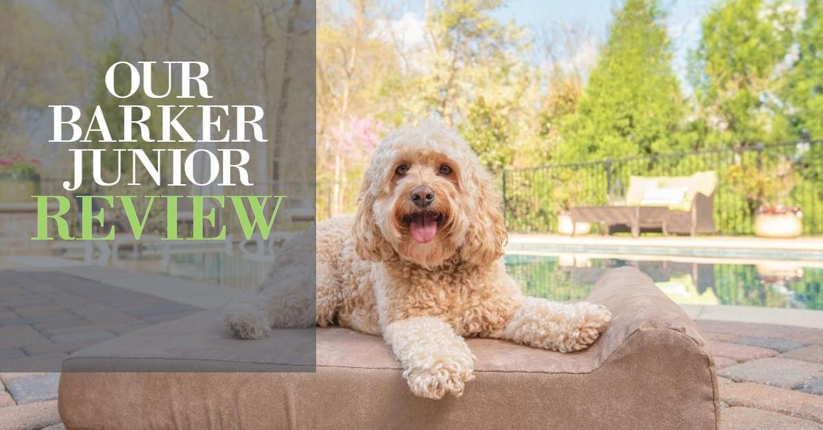Big Barker Junior Review