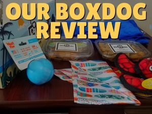 Our BoxDog Review: The Unboxing