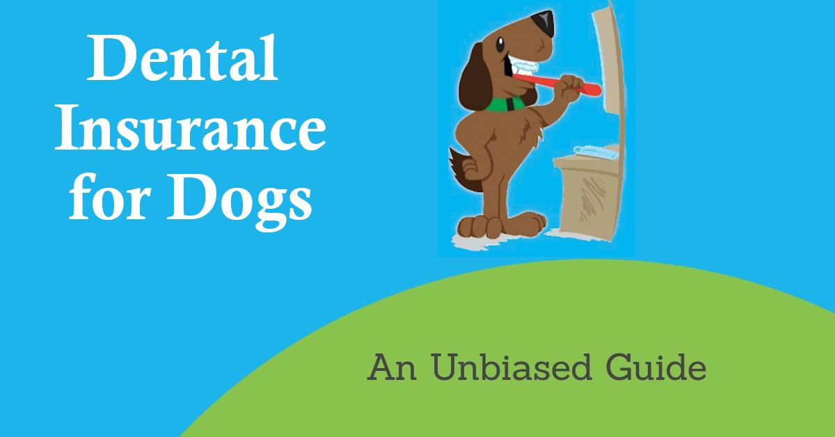 Dog holding toothbrush for article on dental insurance for dogs